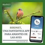 BirdNET una App para amantes de la naturaleza